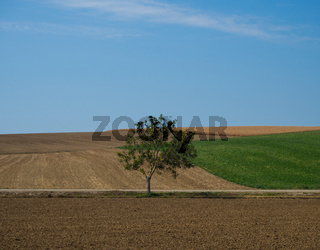 Single tree landscape
