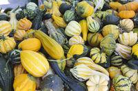 Ornamental pumpkin sale