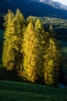 Light and shadows. Autumn morning mountain village environs grassy hills, small pine-aspen grove in first sun light, deep shadows on slopes. Picturesque seasonal and countryside beauty concept scene.