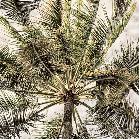 palm leaf and branch view from down