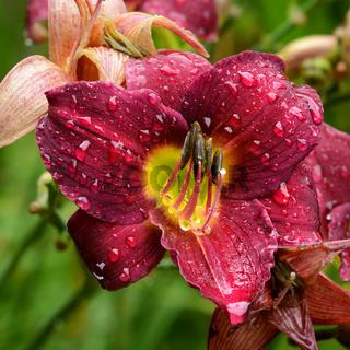 Blumen 934