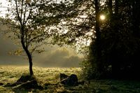 Autumn trees at the edge of the forest in backlight, meadow, Oberpfalz, Bavaria