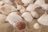 Sea shells on a sunny beach