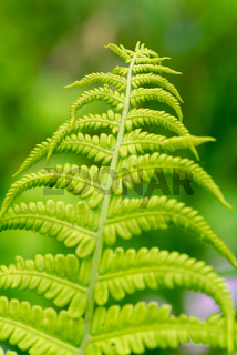 Fern leaves close-up view in the forest