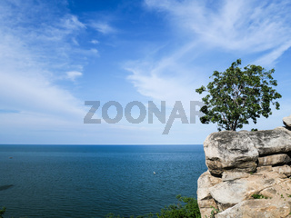Lonely tree on a cliff on a clear cloudless sunny morning. Stony coast and a lonely tree on the rocks.