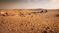 camel ride in the desert Cairo Egypt