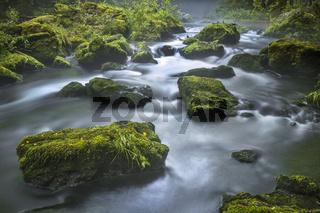 Im Naturschutzgebiet 'Triebtal' im Vogtland