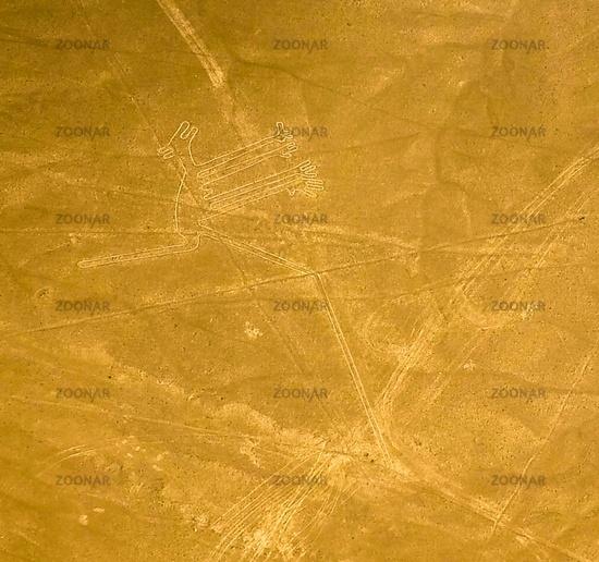 Aerial airplane panoramic view to Nazca geoglyph lines aka Dog, Ica, Peru