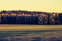 autumn outdoor nature scene with tree