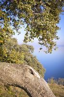 Idyllic Landscape with a lake and a tree (evergreen oak)