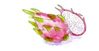 pitahaya or dragon fruit  Watercolor