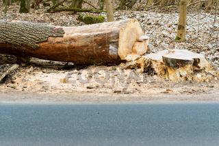 sawed the trunk of the tree, felling trees on the road, felled the tree
