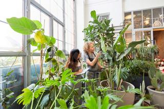 Gärtner kontrollieren Qualität der Grünpflanzen