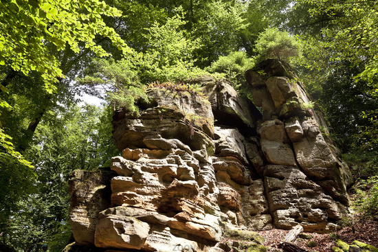 rock wall of the Devil´s Gorge in the South Eifel Nature Park, Irrel, Eifel, Germany, Europe
