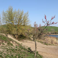 Spring at the Arkenberge hills in Berlin
