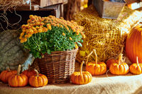 Fresh pumpkins on farm market still life