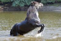 Billy, a Dale Pony