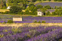 lavender landscape with different huts near village Sault
