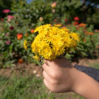 Kind hält einen Blumenstrauß aus gelben Blüten im Sonnenschein  in der Hand vor unscharfem buntem Hi