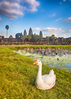 Angkor Wat temple at sunset. Siem Reap. Cambodia
