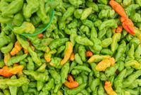 Fresh ripe green murupi pepper spread all over
