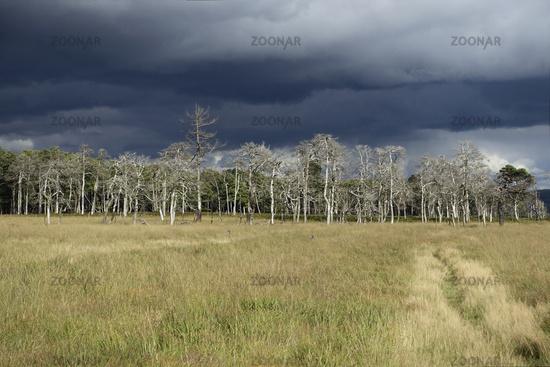thunderstorm coming up above the High Fens... High Fens * Eifel *