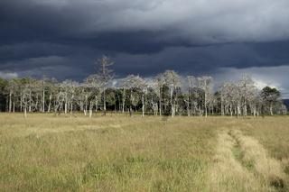 bedrohliche Gewitterwolken über dem hohen Venn... Hochmoor * Eifel *