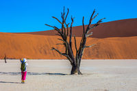 Elderly woman photographing picturesque dried tree