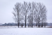 Landscape in winter, with trees. Was seen near the little town Nauen