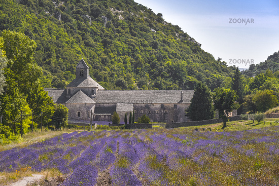 Senanque Abbaye with lavender field
