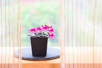 Small potted flowers blooming near window in house