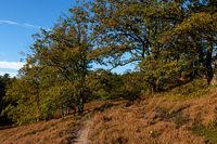 Hiking trail Fischbeker Heide