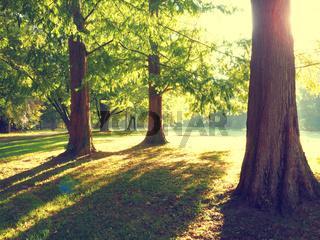 Sunrise in a park, vintage color toned
