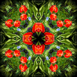 Square, kaleidoscope, a pattern from a photo of flowers growing in a flowerbed, red tulips