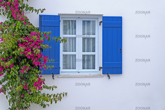 Window with Bougainvillea