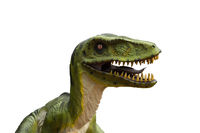 Primeval dinosaur tyrannosaurus in front of white background