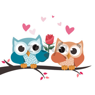 Valentine owls in love. Giving a flower