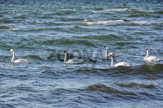 Ostsee Luebecker Bucht bei Gross Schwansee