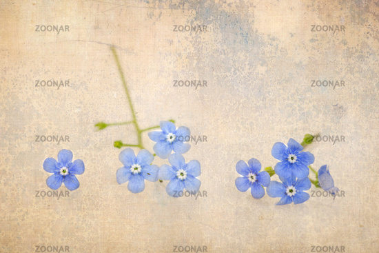 Forget-me-not with superimposed texture