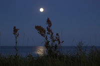 Moonlight reflected at night on the sea in Langeland, Denmark, Baltic Sea