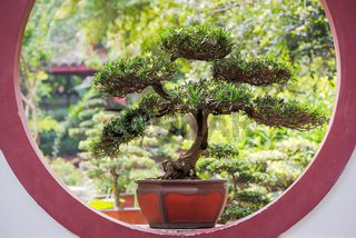 Bonsai tree on a circular window