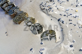 Köpfe von Pfählen einer Buhne am sandigen Strand an der Ostsee bei Zingst