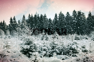 Snowfall in winter forest. Nature background with snow.