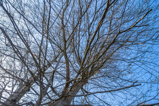 a leafless tree in the sky