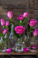 Bunch of lush pink roses