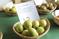 Pear variety, Swiss trousers, Swiss trousers,