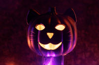 Cat Halloween Carved Pumpkin Glowing in the Dark.