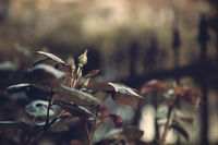 lonely bud of hope in melancholic ambience