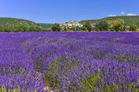 lavender field with village Banon