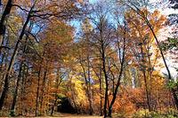 Light-flooded autumn forest